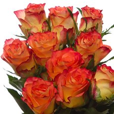 Imported Intermediate Fresh Rose Bunch 10 Catch (40cm)