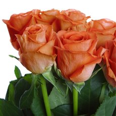 Imported Intermediate Fresh Rose Bunch 10 TropicalAmazon40cm