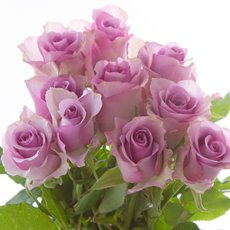 Fresh Roses - Fresh Rose Imported Premium Bunch10 Purple Nightingale(50cm)