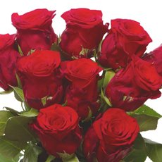 Fresh Roses - Fresh Rose Imported Platinum Bunch 10 Ever Red (60cm)
