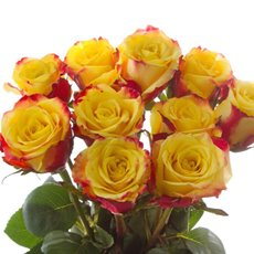 Fresh Roses - Fresh Rose Imported Premium Bunch 10 Salambo (50cm)