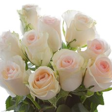 Fresh Rose Imported Premium Bunch 10 Senorita (50cm)