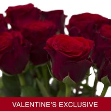 Imported Premium A Rose Bunched 10 Upper Class (50cm) VAL