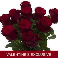 Imported Premium A Rose Bunched 10 Upper Class (60cm) VAL