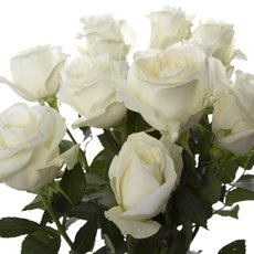 Imported Premium A Fresh Rose Bunched 10 Proud (50cm)