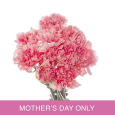 Other Fresh Flowers - Fresh Carnation Bunch 10 Light Pink Mothers Day MD