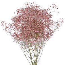 Other Fresh Flowers - Fresh Babys Breath Gypsophila Pink 70cm x 200 gram