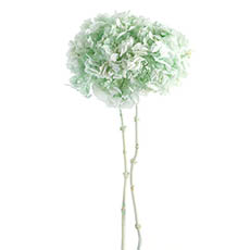 Dried & Preserved Flowers - Dried Hydrangea Big Petals Stem 15-35cm Head Assorted