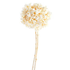 Dried & Preserved Flowers - Dried Hydrangea Big Petals Stem 15-35cm Head White