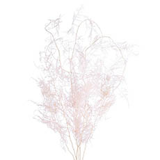 Dried & Preserved Flowers - Dried Asparagus Fern Bunch 30g Assorted
