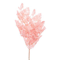 Dried & Preserved Flowers - Preserved Dried Ming Fern Bunch 85-90g Soft Pink