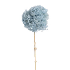 Dried & Preserved Flowers - Preserved Dried Large Petal Hydrangea Stem Ice Blue