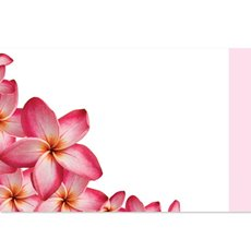 Cards Frangipani Beauty 50 Pack (10x6.5cmH)