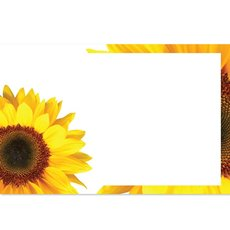 Cards Sunflower with Border 50 Pack (10x6.5cmH)