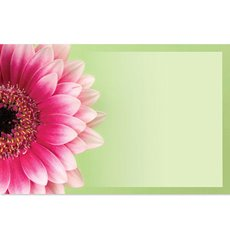 Small Florist Enclosure Cards - Cards Gerbera Pink with Border Green Card50 Pack (10x6.5cmH)
