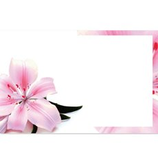 Florist Enclosure Cards - Cards Tiger Pink Lily (10x6.5cmH) Pack 50