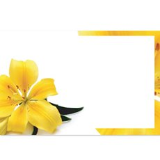 Cards Tiger Yellow Lily 50 Pack (10x6.5cmH)