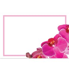 Florist Enclosure Cards - Cards Pink Orchid Phalaenopsis with Border(10x6.5cm) Pack 50