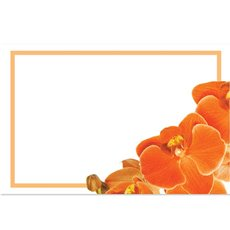 Cards Orange Orchid Phalaenopsis w/Border 50 Pack (10x6.5cmH