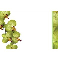 Florist Enclosure Cards - Cards Green Orchid Phalaenopsis (10x6.5cmH) Pack 50