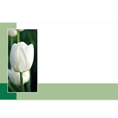 Cards White Tulip 3D 50 Pack (10x6.5cmH)