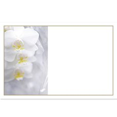 Cards Orchid Phalaenopsis White 50 Pack (10x6.5cmH)