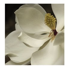 Cards Square Magnolia White (10x10cm) 50Pk