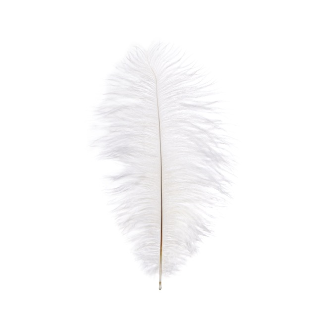 Feather Spray Ostrich 2PC Pack White (36-40cm)