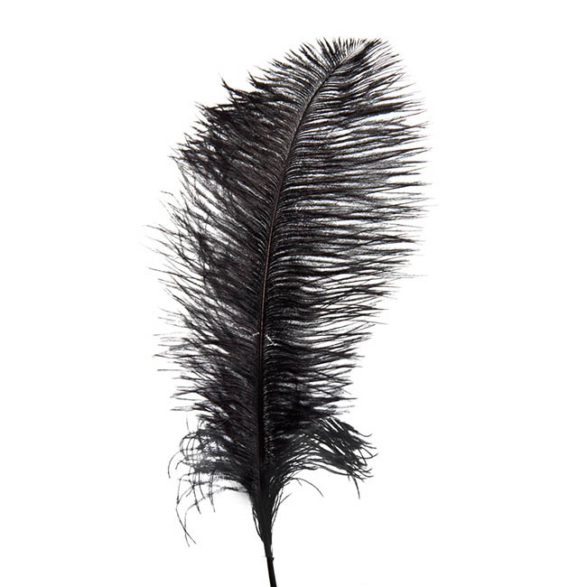Feather Spray Ostrich 2PC Pack Black (46-50cm)