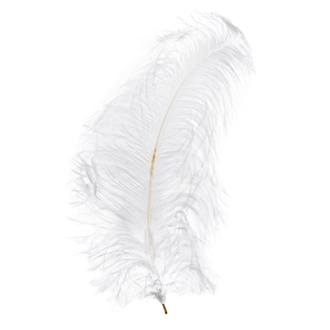 Feather Spray Ostrich 2 Pack White (56-60cm)