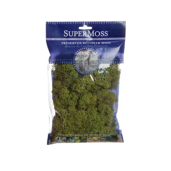 Reindeer Moss Preserved Bag Moss Dark Green (55gm 2oz)