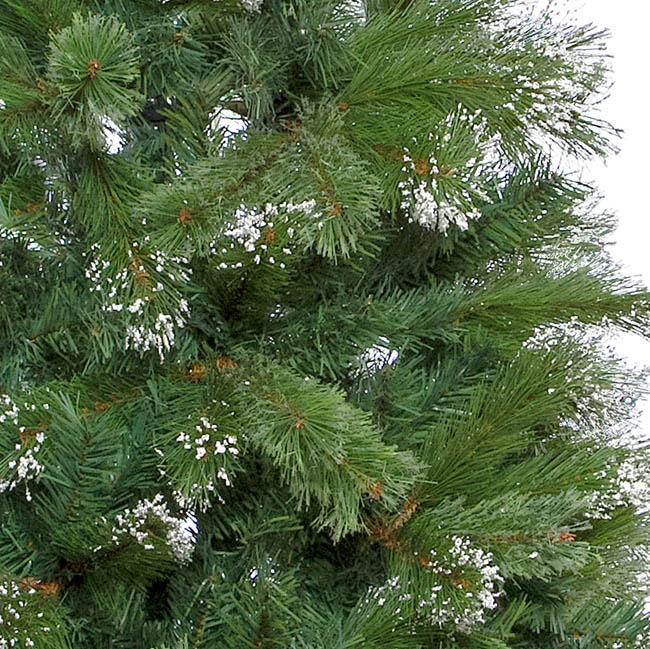 Australian Christmas Tree Pine.Cashmere Pine Christmas Tree With Snow Tips Green 180cmh