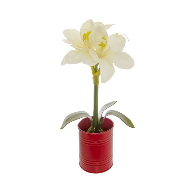 Christmas Flowers - Amaryllis Potted Red Tin White (35cmH)