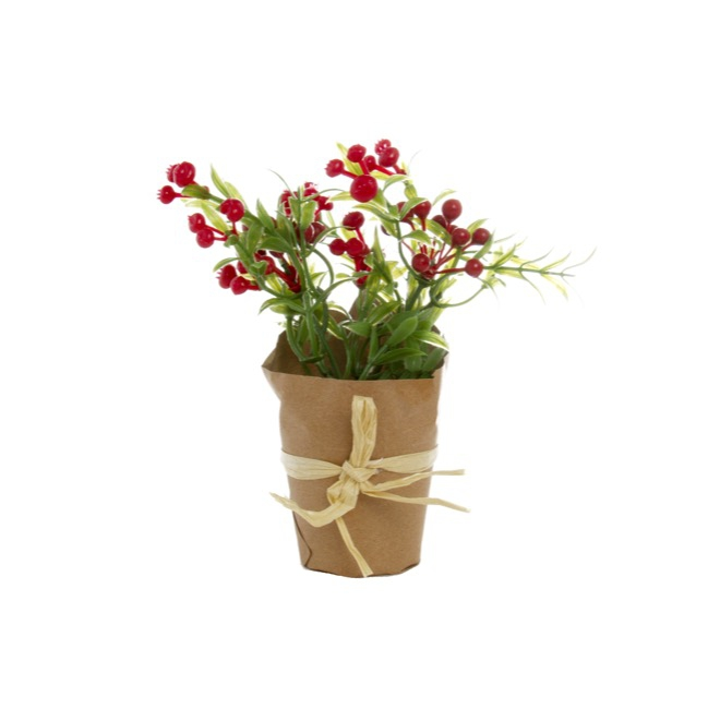Potted Pomegranate Berry Plant in Paper Wrap Red (17cmH)