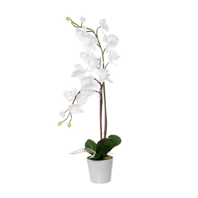 Phalaenopsis Orchid in Ceramic Pot White  (83cmH)