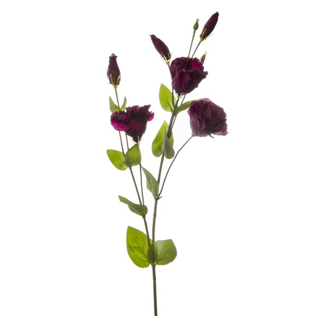 Lisianthus Spray Burgundy (89cmH)