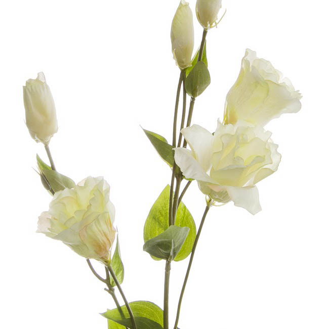 Other Flowers - Lisianthus Spray Cream (89cmH)