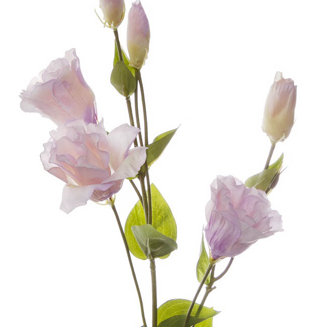 Other Flowers - Lisianthus Spray Cream Lavender (89cmH)