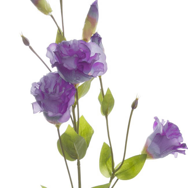 Other Flowers - Lisianthus Spray Purple (89cmH)