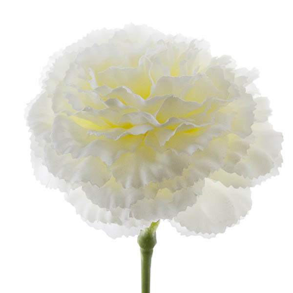 Carnation Ruffle Stem White (42cmH)