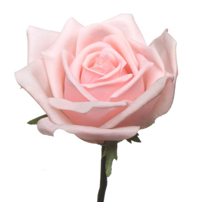 Artificial Roses - Siena Rose Open Real Touch Bridal Pink (75cmH)