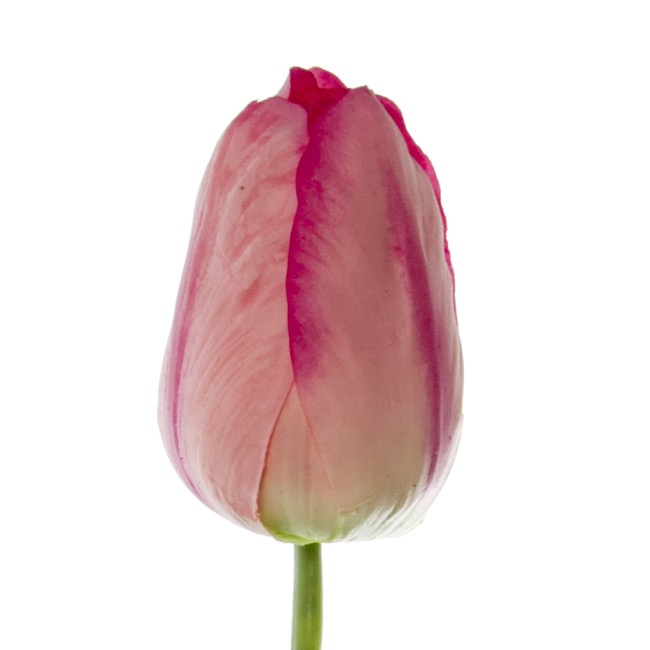 Other Flowers - Tulip Parrot Large Real Touch Hot Pink (56cm)