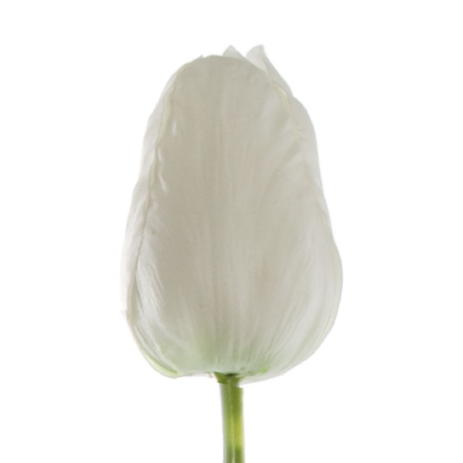 Other Flowers - Tulip Parrot Large Real Touch White (56cm)