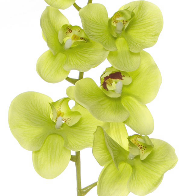 Artificial Orchids - Phalaenopsis Orchid Real Touch 8 flowers Green (97cmH)