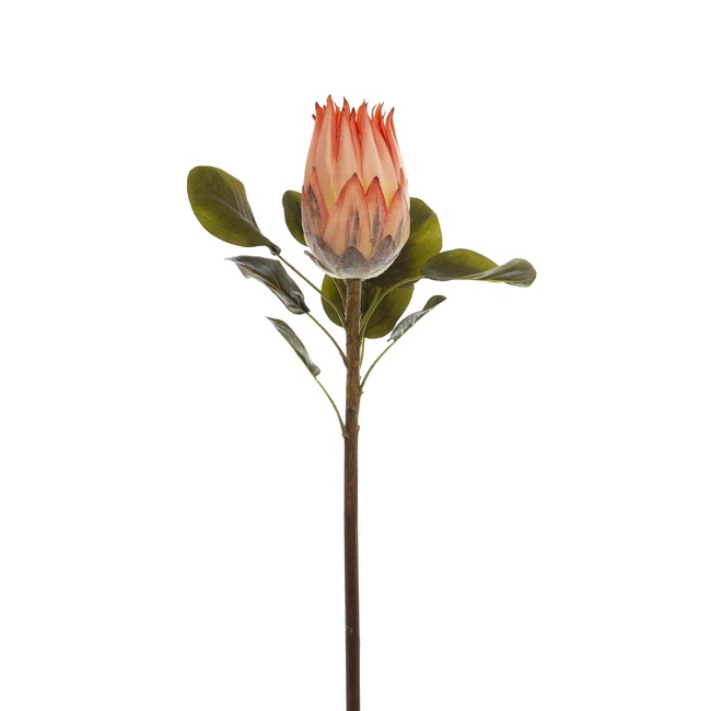 Australian & Native Flowers - Native Queen Protea Coral (62cmH)
