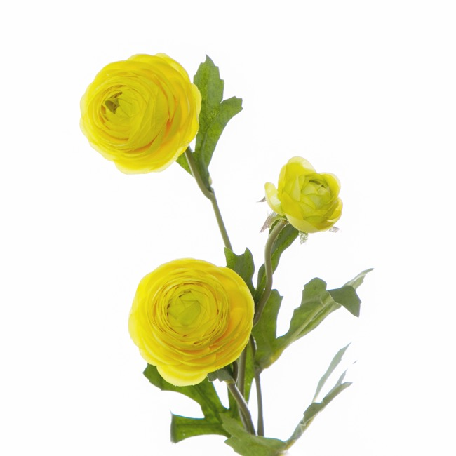 Other Flowers - Petite Ranunculus Spray Yellow (42cmH)