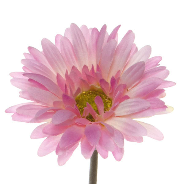 Other Flowers - Gerbera Aztec Pink  (54cm)