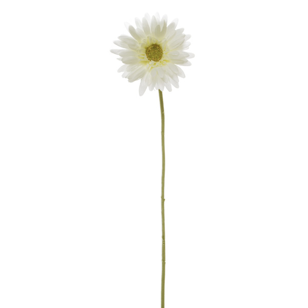 Other Flowers - Gerbera Aztec White (54cm)