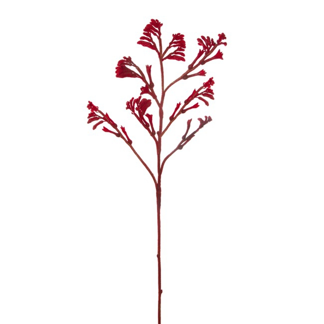 Australian & Native Flowers - Australian Native Kangaroo Paw Spray Red (78cmH)