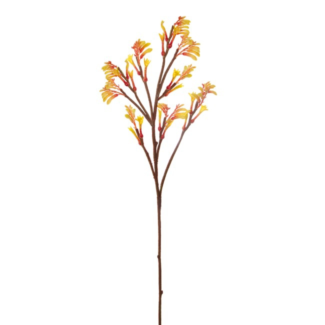 Australian Native Flowers - Australian Native Kangaroo Paw Spray Yellow (78cmH)